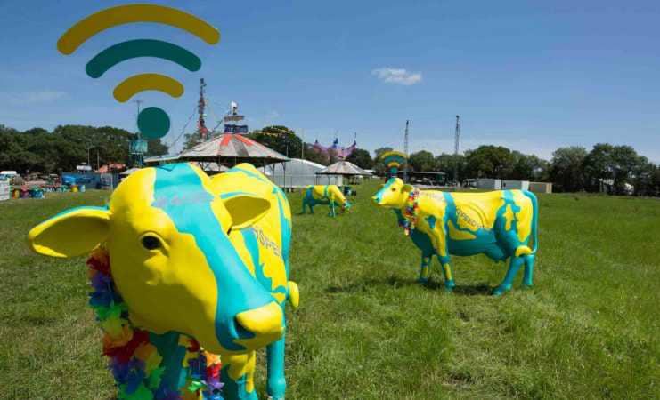 glastonbury wifi cows